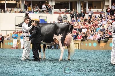 WDE Holstein Sr Cows 2017