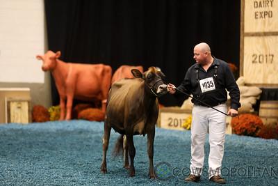 WDE Jersey Senior Cows 2017