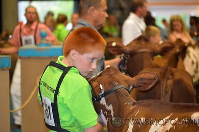 WDE Milking Shorthorn Heifers 2017