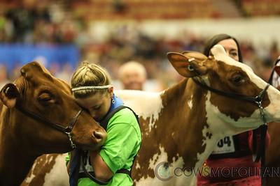 WDE RW Holstein Heifers 2017