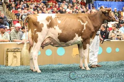 WDE RW Holstein Sr Cows 2017