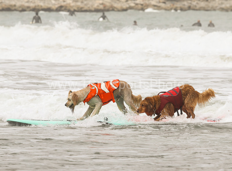 2018 NorCal 3rd Annual World Dog Surfing Championship at Linda Mar Beach