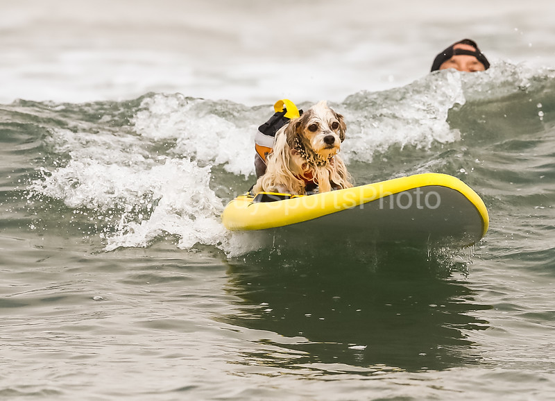 2019 Nor-Cal World Dog Surfing Championship at Linda Mar Beach