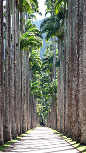 Rio Botanical Gardens - Rio de Janeiro, Brazil (2007). Copyright © 2007 Alex Emes