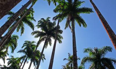 Rio palms - Rio de Janeiro, Brazil (2007). Copyright © 2007 Alex Emes