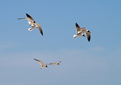 Pairs - Padre Island, Texas. Copyright © 2009 Alex Emes