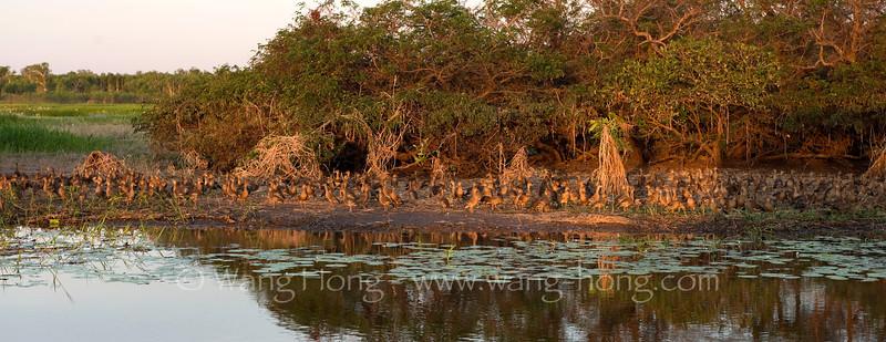 Yellow Water at sunset, Kakadu National Park, Northern Territory.
