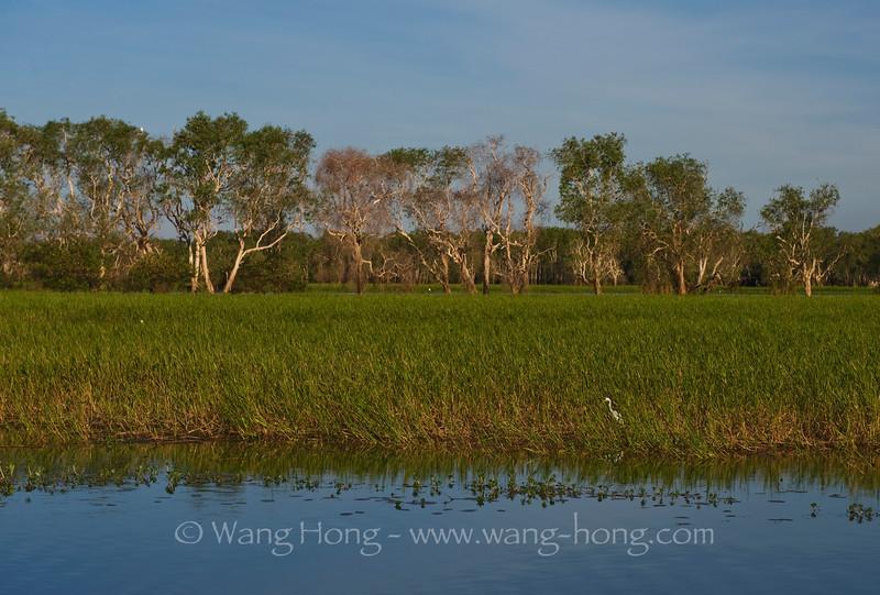 Yellow water at sunset, Kakadu National Park, Australia Northern Territory