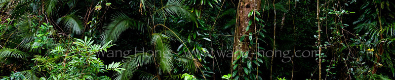 In Daine Tree National Park, part of the Wet Tropics World Heritage Area in Queensland.