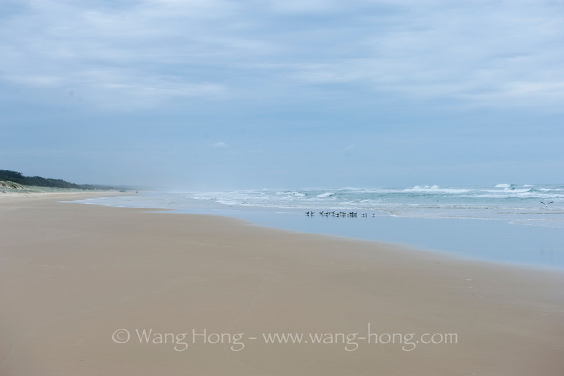 """Beach """"highway"""" on Fraser Island, the largest sand island in the world. Many parts of the island can only be accessed at low tides with a 4WD vehicle on this long long beach."""