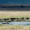 Hippos and Hayenas in Ngorongoro Crater