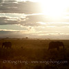 Elephants in early morning light in Serengeti National Park