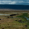 Lions enjoying a siesta in Ngorongoro Crater