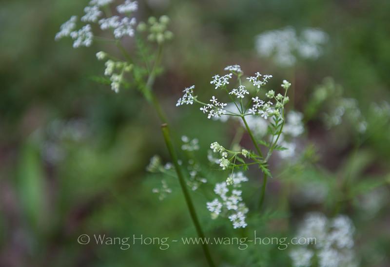Wilder flowers along the hiking down from Yuan Jia Jie to Jin Bian Creek. 袁家界到金鞭溪途中野花灿烂。