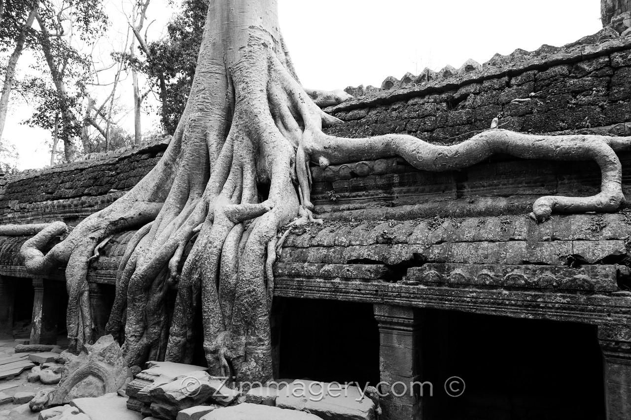 B&W Banyon Temple, Angkor Wat, Cambodia