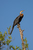 TENDABA 2014-01-04<br /> Tendaba known for its nature, people and bird photography, in the Gambia<br /> Photo Maria Langen / Sverredal & Langen AB