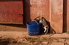 BANJUL 2014-01-01<br /> Banjul cat<br /> Photo Maria Langen / Sverredal & Langen AB