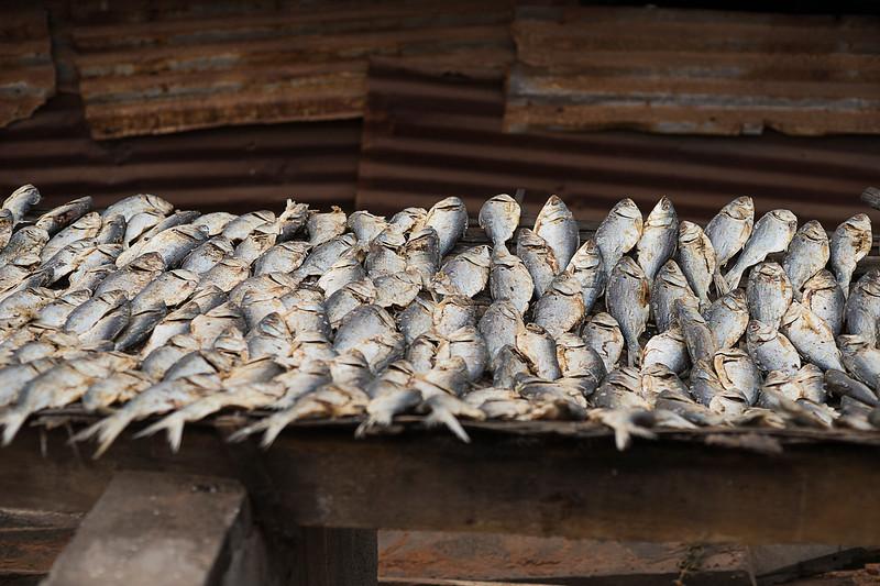BAKAU 2014-01-09<br /> Fishing village in the Bakau area, in the Gambia <br /> Photo Maria Langen / Sverredal & Langen AB
