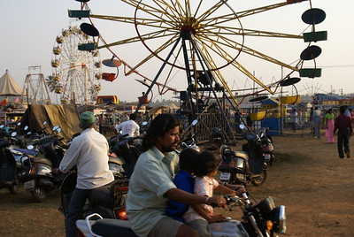 Indian curcus