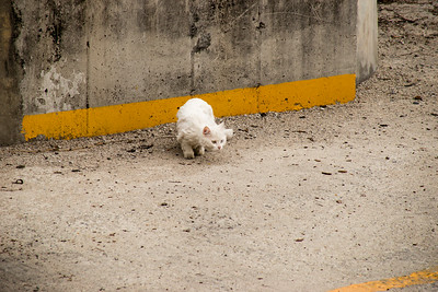 SouthKorea_cat_April2015_MariaLangen