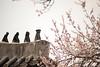 SouthKorea_April2015_MariaLangen_3720