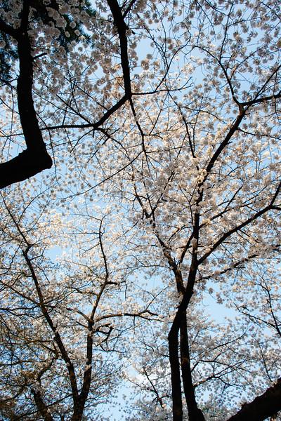 SouthKorea_April2015_MariaLangen_3840