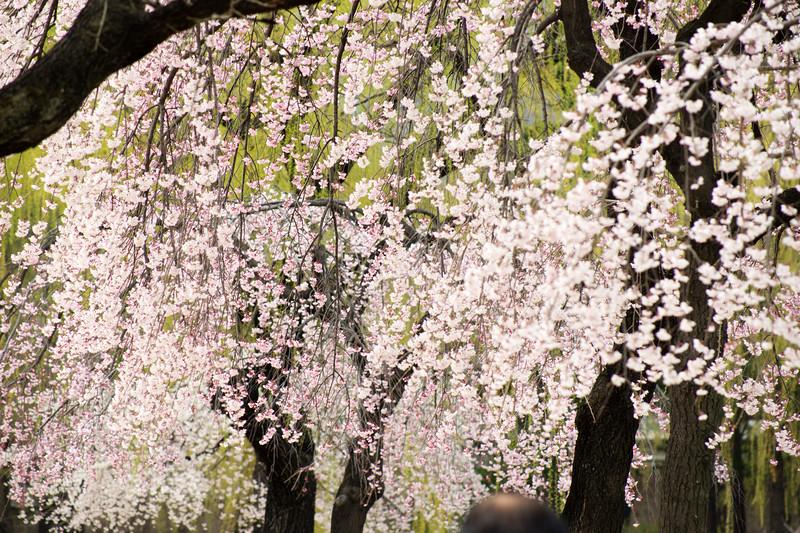 SouthKorea_April2015_MariaLangen_3788