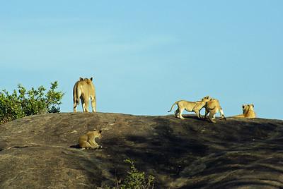 SERENGETI 2007-12-17 Wild life in Tanzania Photo Maria Langen / Sverredal & Langen AB