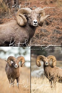 Ram Collage