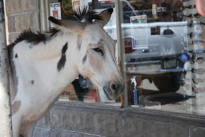 Oatman, Old Route 66, Arizona, USA - 2010.
