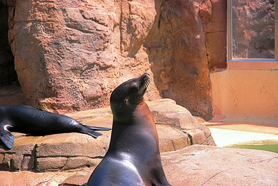 SeaWorld, San Diego, California, USA - 2010.