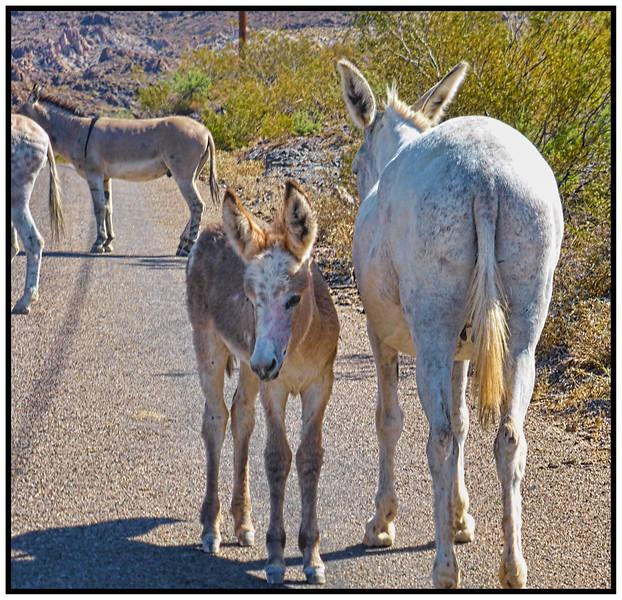 Oatman, Old Route 66, Arizona, USA - 2015.