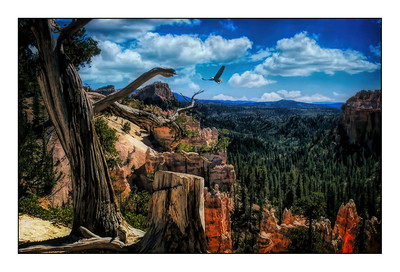 Bryce Canyon National Park, Utah, USA - Over The Years.