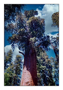 Sequoia National Park, California, USA - Over The Years.