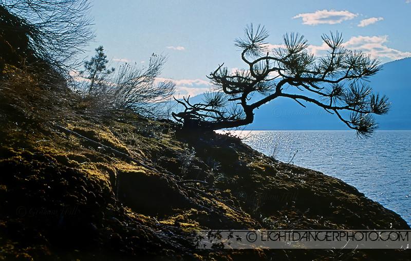 Okanagan - Twisted Pine