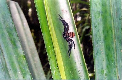 13 Spider
