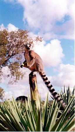 Madagascar, a world apart (April 2000)