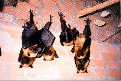 07 Bats