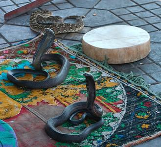 Cobras (Marrakech's Djemaa el Fna square)