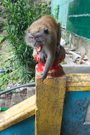 The monkeys looked all cute, until they decided you weren't giving them enough food.  What the hell?