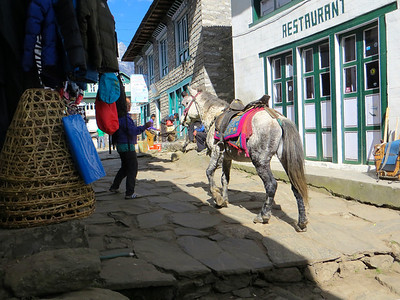 Horse to carry tourists who need medical help