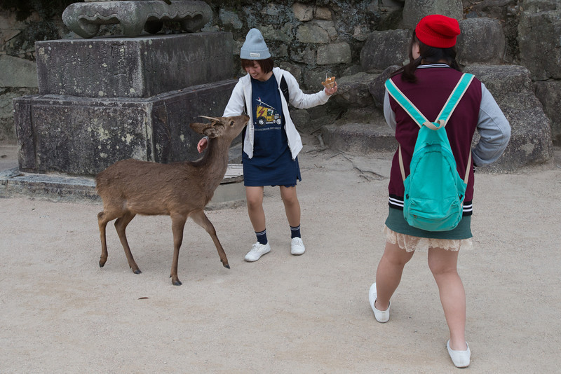 The deer on Miyajima Island were everywhere and fairly aggressive.  This girl found out the hard way...  If you have food, they will harass you.