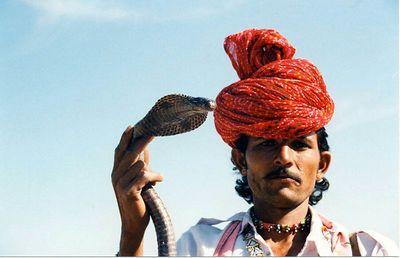 06 Snake (Pushkar)