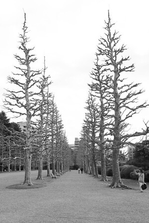 Trees in the National Garden