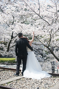Wedding photos under the blossoms