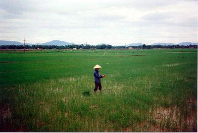 13 Rice fields