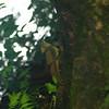 Another Emerald Basilisk