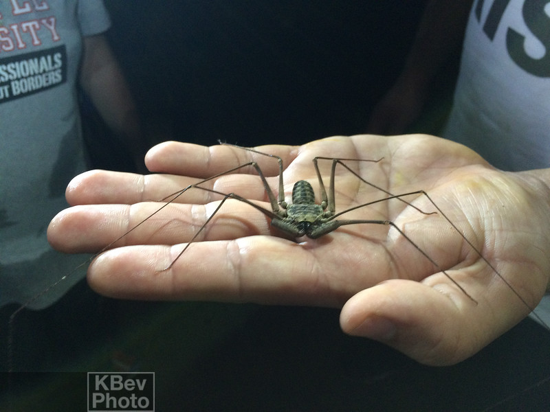 One of the cave monsters we saw. Scorpion Spider