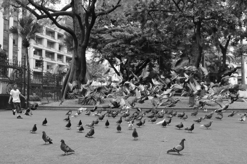 """When I saw a man throwning breadcrumbs out to attract pigeons in the Plaza del Centrario (Guayaquil), I ran to the scene and thought: """"What I need are some kids to run through""""...  And right on cue, this boy and his 2 sisters ran through the flock."""