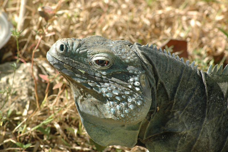 Pedro - at the turtle farm